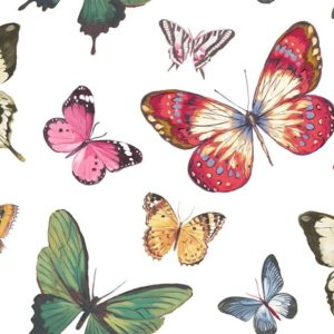 wallquest-jaima-brown-home-chelsea-lane-butterfly-jb60300