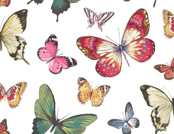 wallquest-jaima-brown-home-chelsea-lane-butterfly-jb60300