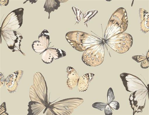 wallquest-jaima-brown-home-chelsea-lane-butterfly-jb60308