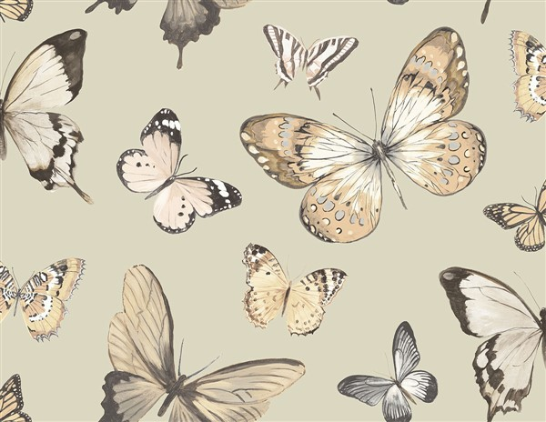 wallquest-jaima-brown-home-chelsea-lane-butterfly-jb60308